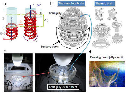 Brain jelly - design and construction of an organic, brain-like computer | Post-Sapiens, les êtres technologiques | Scoop.it