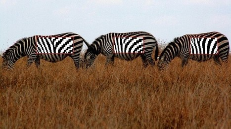 StripeSpotter turns wild zebras into trackable barcodes | Tech News Today | Scoop.it