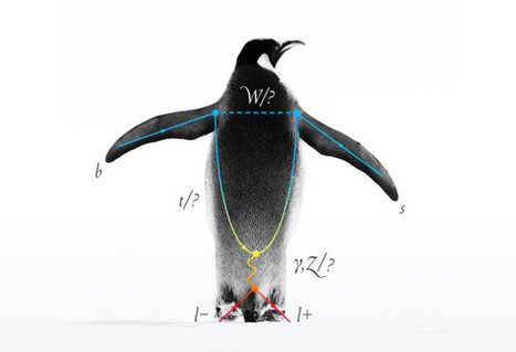 'Penguin' Anomaly Hints at Missing Particles |  Quanta Magazine | Knowmads, Infocology of the future | Scoop.it