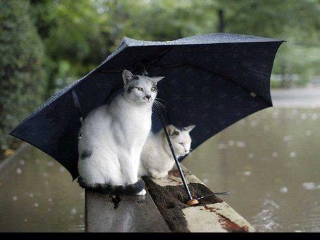 Temps pluvieux : moins de visites dans les agences immobilières   Infos & Actualités de l'immobilier   Scoop.it