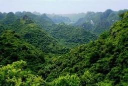 Côte d'Ivoire: La Côte d'Ivoire perd près de 200.000 hectares de forêts chaque année - Koaci Infos | News - Filière bois | Scoop.it