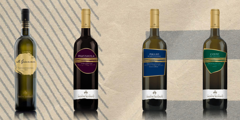 Medals and Mentions for Monte Schiavo Wines at the DECANTER WORLD WINE AWARDS 2015 | Wines and People | Scoop.it