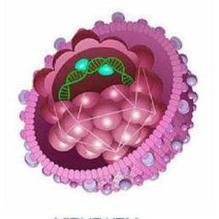 Infezioni da HBV e HDV: ancora un problema di sanità pubblica in Italia | San Carlo News | Scoop.it