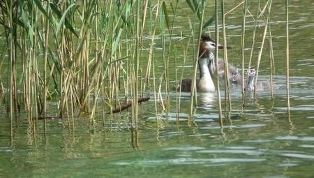 Agence française pour la Biodiversité : les parties prenantes associées | Environnement et développement durable, mode de vie soutenable | Scoop.it