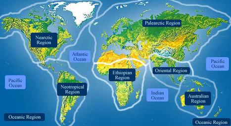 ADW: Spheniscus mendiculus: INFORMATION | galapagos penguin | Scoop.it