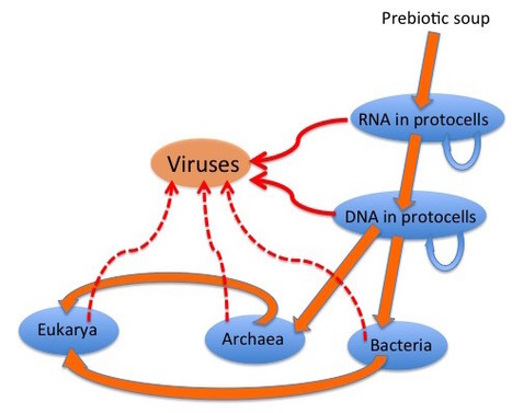 Origins and evolution of viruses of eukaryotes: The ultimate modularity | Virology News | Scoop.it