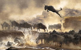 Winners of the 2014 Sony World Photography Awards, Part I | photography | Scoop.it