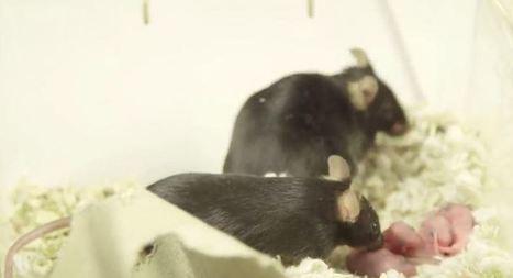 La procedura d'infrazione per l'Italia sulla sperimentazione animale - neXt Quotidiano | Appunti | Scoop.it