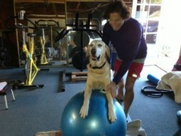 Reasons that a Dog is a Great Workout Partner | Coffee Puppy Photos, News & Resources | Scoop.it