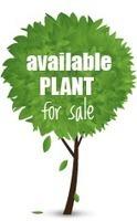 sachin Nursery: Get nursery trees in India for plantation by Sachin Nursery | sachin nursery | Scoop.it