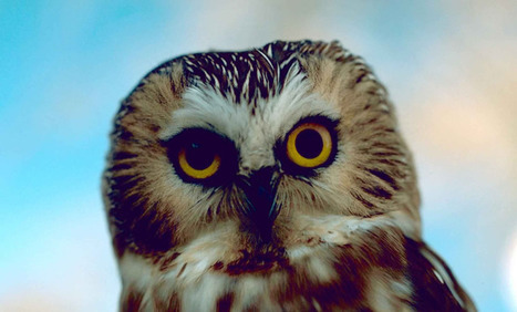 Back to Basics: HootSuite & Twitter Lists | Social Biz: Social Business and the Internet | Scoop.it