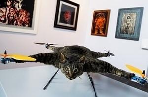 A Dead Cat Flies. But Is It Art? - Forbes | The Matteo Rossini Post | Scoop.it