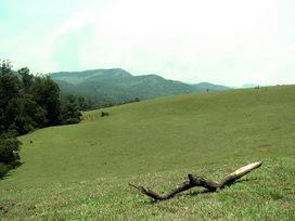 Wenlock Downs Beautiful Grassland | OotyBudgethotels | Scoop.it