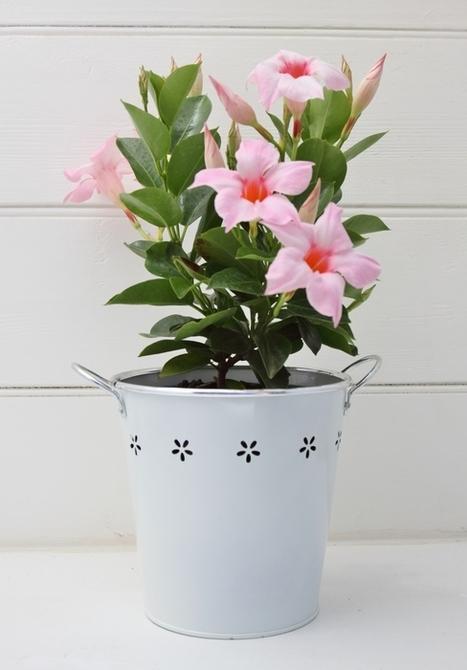 Plants Online - Green Thumb Gifts | Plants Online | Scoop.it