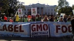 Former FDA official on GMO labeling: 'Science doesn't always win' | Nutrition & Health | Scoop.it