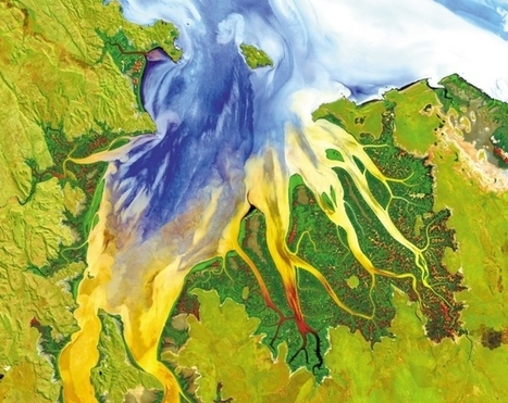 Environmental science: Agree on biodiversity metrics to track from space | Using Wildlife Survey Data | Scoop.it