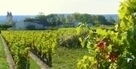 Vin : La force tranquille de la Loire | AOC Chinon et Vins de loire | Scoop.it
