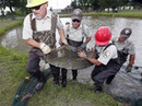Huge, once-hated fish now seen as weapon against Asian carp | Aquaculture Directory | Scoop.it