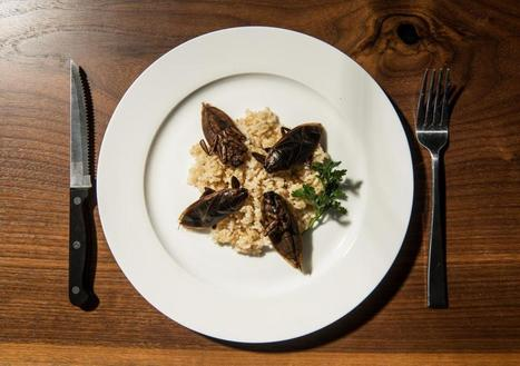 The Rise of the Edible Insect - Seattle Weekly   EDIBLE INSECTS   Scoop.it