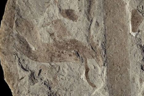 Life forms 'went large' a billion years ago - BBC News | Jeff Morris | Scoop.it