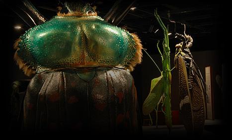 Entomo-calendrier février 2016   Variétés entomologiques   Scoop.it