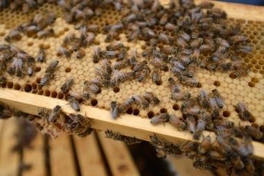 L'Ontario restreindra l'utilisation d'insecticides nuisibles aux abeilles | Abeilles, intoxications et informations | Scoop.it