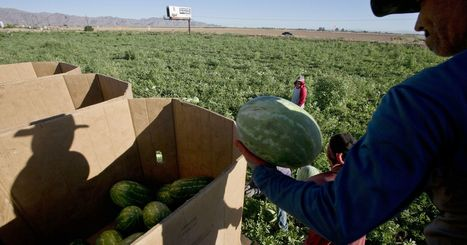 My Turn: In search of equality for Arizona farmwokers | CALS in the News | Scoop.it