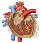 Heart & Cardiac Surgery Treatment in India | Health & Fitness Services | Scoop.it