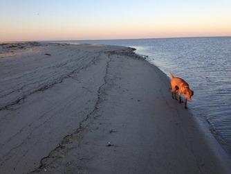Martha's Vineyard Photo of the Day: Max at the Beach | Where can I take my dog to the beach? | Scoop.it