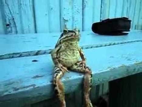 A Frog Sitting on a Bench Like a Human | Stumbleupon | Scoop.it