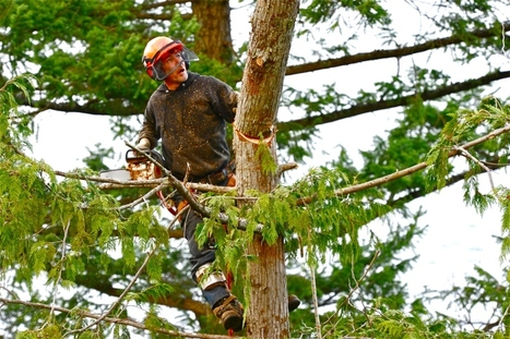 Our Tree Contractor Knows How to Plant and Grow a Japanese Maple » CJ S Tree Service of Omaha | Tree Service | Scoop.it