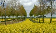 Trees breathing new life into French agriculture | forest gardening | Scoop.it