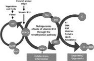 Molecular and cellular effects of vitamin B12 in brain, myocardium and liver through its role as co-factor of methionine synthase   B12 & genetics   Scoop.it