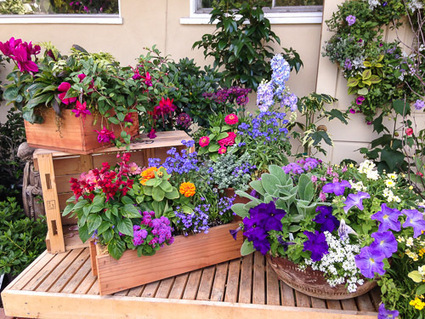How to Plant a Container Garden to Enhance Your Yard   INSTALL-IT-DIRECT   Garden Designer   Scoop.it