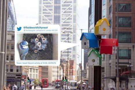 Les rues de Londres peuplées de nichoirs colorés pour faire revenir les oiseaux | Biodiversité & Relations Homme - Nature - Environnement : Un Scoop.it du Muséum de Toulouse | Scoop.it