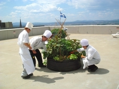 Tout est jardin | Les Urbainculteurs ramènent l'agriculture dans la ville | Locavore | Manger Juste & Local | Scoop.it