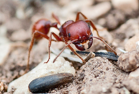 Futurity.org – Wait for it: Ants pick perfect time to forage | Radio Show Contents | Scoop.it