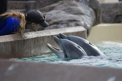 There Is Nothing 'Cute' About Whale and Dolphin Captivity – Here's Why | All about water, the oceans, environmental issues | Scoop.it