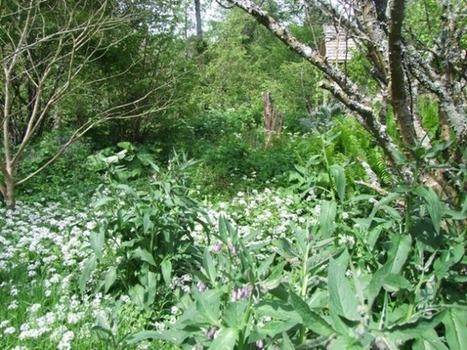 Une forêt qui se mange | Trames Vertes Urbaines | Scoop.it