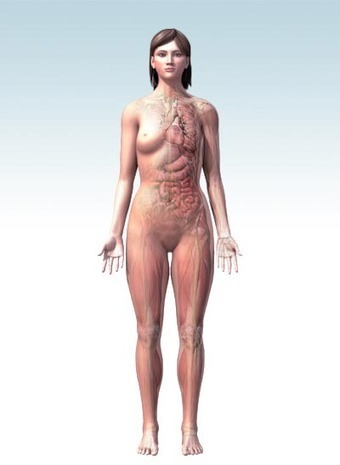 Human Body Maps | 3D Models of the Human Anatomy | Healthline | Interesting Articles for Human Anatomy Lessons | Scoop.it