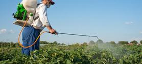 Un rapport du Sénat dénonce la sous-évaluation des risques liés aux pesticides   Abeilles, intoxications et informations   Scoop.it
