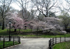 Cherry Blossom Happiness Factor of City-Centric InnerIntelligence | Arrival Cities | Scoop.it