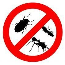 Find a Quality Pest Control Compan | lena88hk | Scoop.it