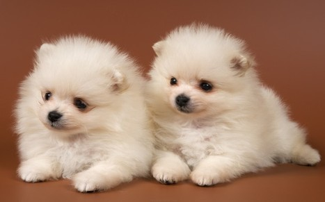 Cute Dogs and Puppies For Sale   Free Indian Classifieds           www.openfreeads.com   Scoop.it