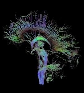 Collegio Borromeo » Corso di Neuroscienze | Neuroscienze | Scoop.it