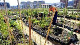 El mayor huerto urbano de Galicia empieza ya a dar frutos   Rural Development   Scoop.it