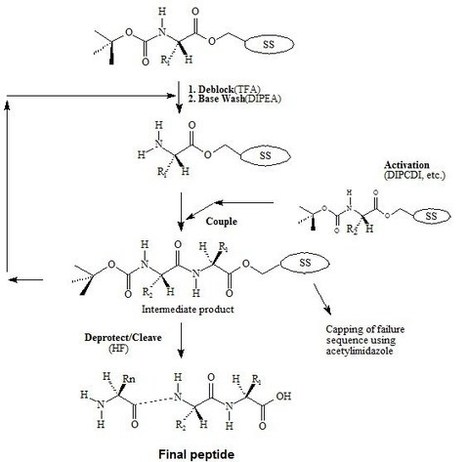 Which solid phase polypeptide synthesis do you like better? Fmoc- or tBoc-chemistry based? | Peptide Synthesis | Scoop.it