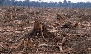 VIDEO: USA FORESTS BEING POISONED AND SUPPRESSED FOR A $13 BILLION GMO TREE ANNUAL BUSINESS - CLEAR CUTTING | Biodiversity IS Life  – #Conservation #Ecosystems #Wildlife #Rivers #Forests #Environment | Scoop.it