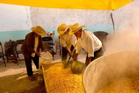 GM maize splits Mexico | Sustain Our Earth | Scoop.it