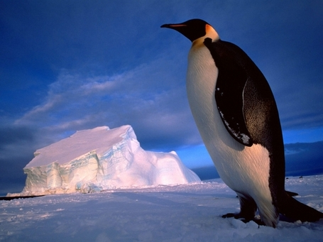 "Google: Further Penguin Update ""Jolts"" To Come; Panda Is Smoother & Monthly 